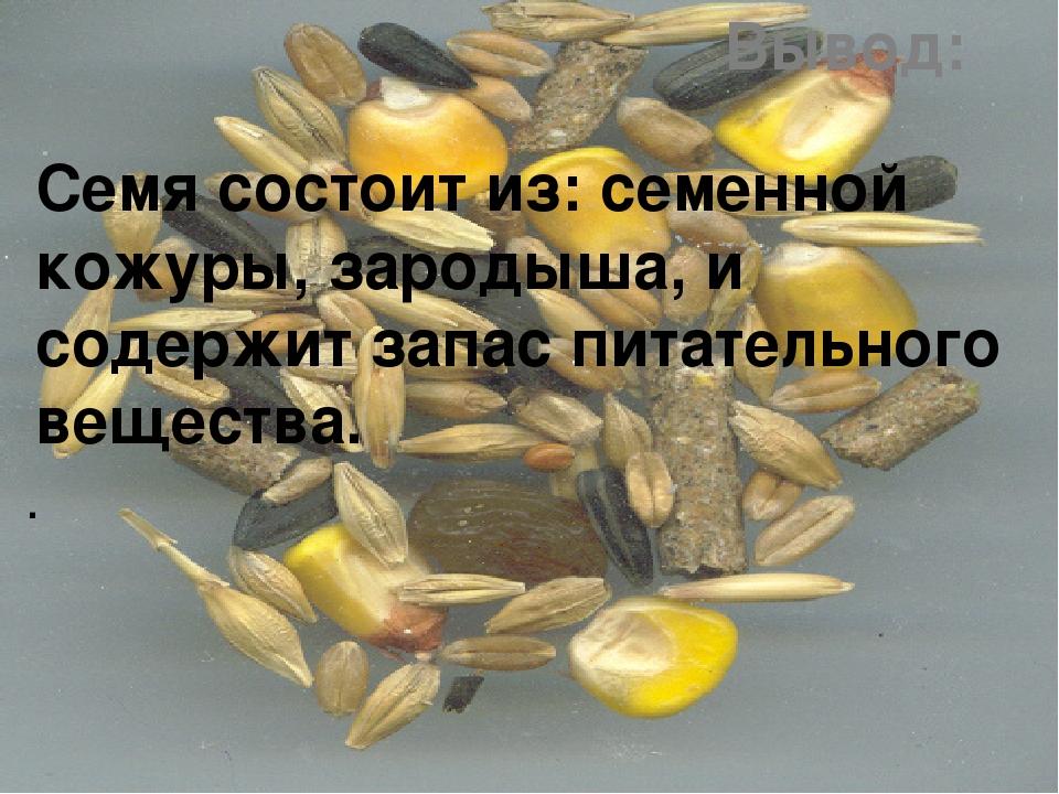 Вывод: Семя состоит из: семенной кожуры, зародыша, и содержит запас питательн...