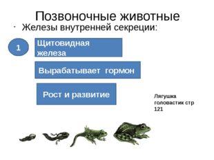 Позвоночные животные Железы внутренней секреции: Щитовидная железа Вырабатыва