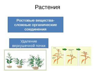 Растения Ростовые вещества-сложные органические соединения Удаление верхушечн