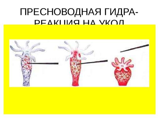 ПРЕСНОВОДНАЯ ГИДРА- РЕАКЦИЯ НА УКОЛ