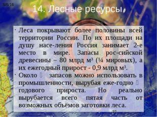Леса покрывают более половины всей территории России. По их площади на душу н