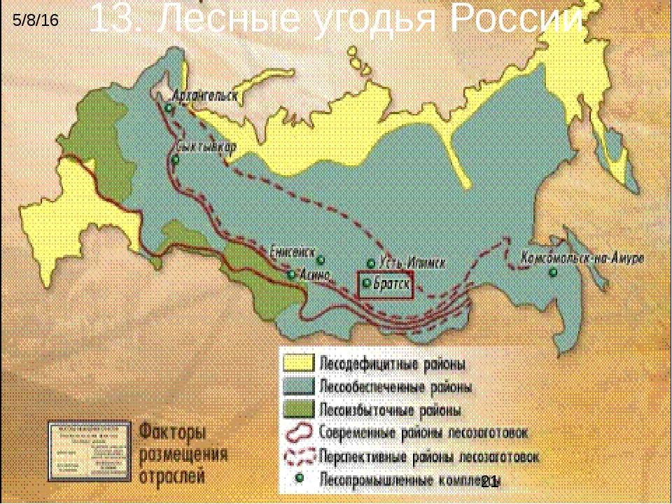 13. Лесные угодья России