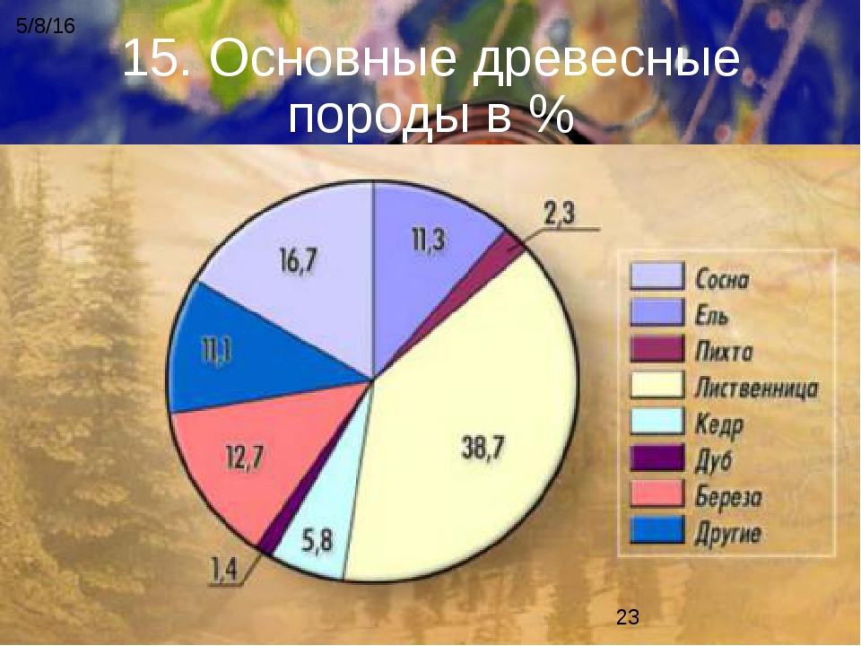 15. Основные древесные породы в %