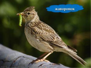 * * жаворонок http://www.deti-66.ru/ http://www.deti-66.ru/