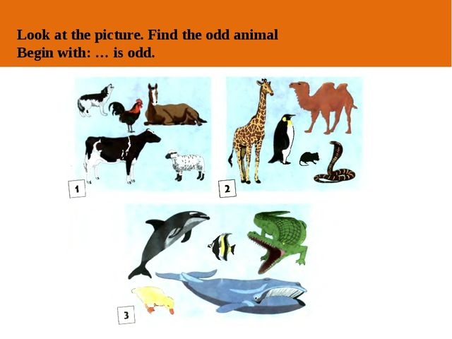 ОТ АВТОРА Look at the picture. Find the odd animal Begin with: … is odd.