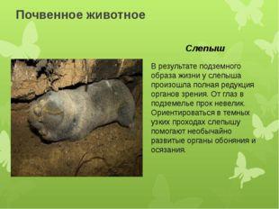 Почвенное животное В результате подземного образа жизни у слепыша произошла п