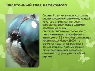 Фасеточный глаз насекомого Сложный глаз насекомого состоит из многих крошечны