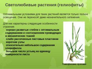 Светолюбивые растения (гелиофиты) Оптимальными условиями для таких растений я