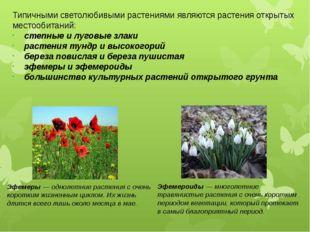 Типичными светолюбивыми растениями являются растения открытых местообитаний:
