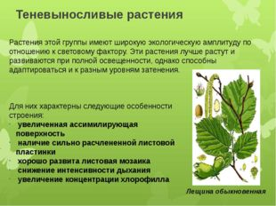 Теневыносливые растения Растения этой группы имеют широкую экологическую ампл