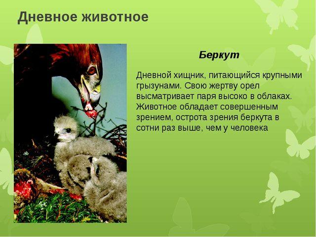 Дневное животное Дневной хищник, питающийся крупными грызунами. Свою жертву о...