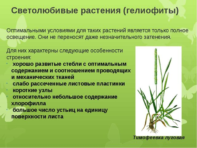 Светолюбивые растения (гелиофиты) Оптимальными условиями для таких растений я...