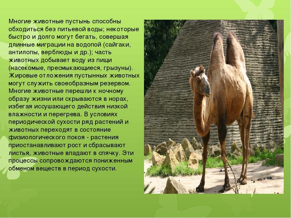 Многие животные пустынь способны обходиться без питьевой воды; некоторые быс...