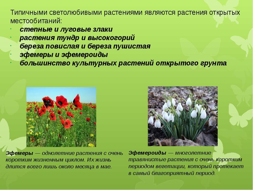 Типичными светолюбивыми растениями являются растения открытых местообитаний:...