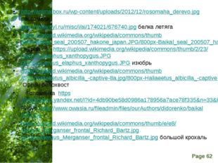 http://animalbox.ru/wp-content/uploads/2012/12/rosomaha_derevo.jpg рассомаха