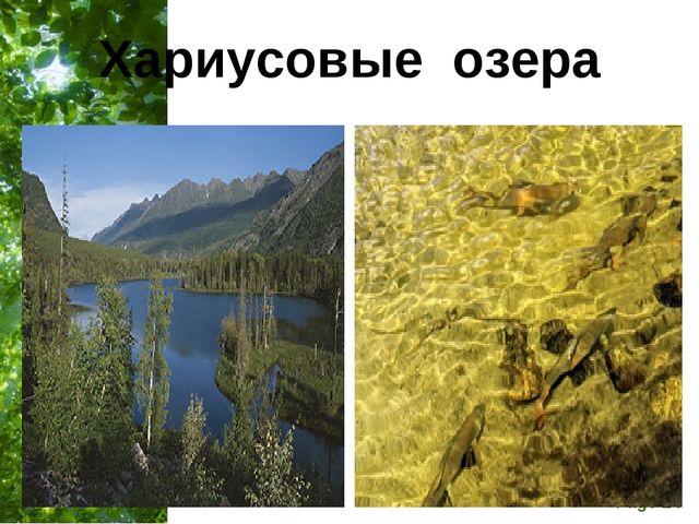 Хариусовые озера Free Powerpoint Templates Page *