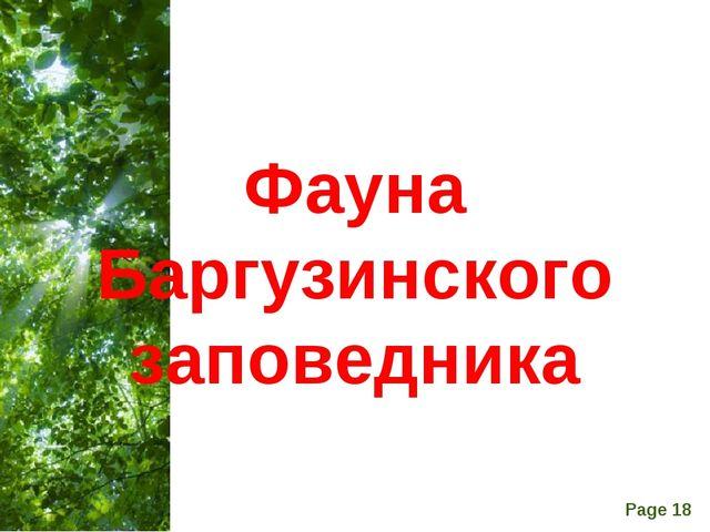 Фауна Баргузинского заповедника Free Powerpoint Templates Page *