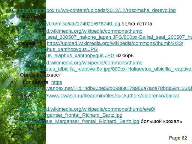 http://animalbox.ru/wp-content/uploads/2012/12/rosomaha_derevo.jpg рассомаха...