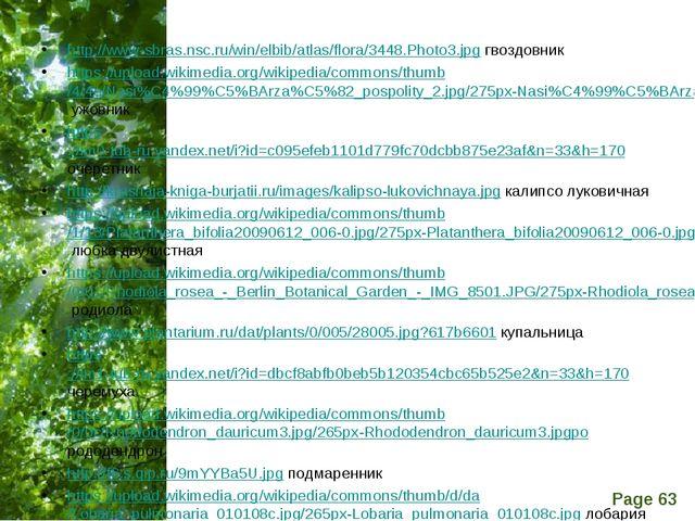 http://www-sbras.nsc.ru/win/elbib/atlas/flora/3448.Photo3.jpg гвоздовник htt...