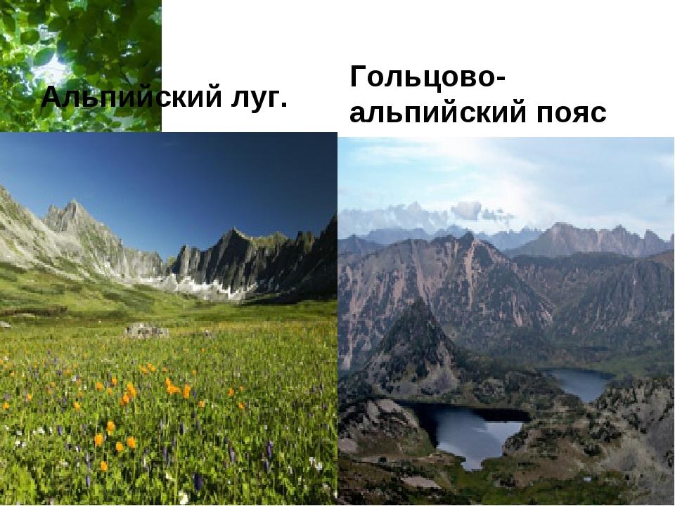 Альпийский луг. Гольцово-альпийский пояс Free Powerpoint Templates Page *