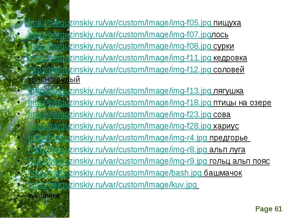 http://barguzinskiy.ru/var/custom/Image/img-f05.jpg пищуха http://barguzinski...