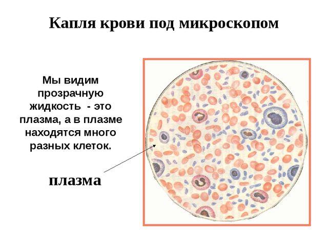 Капля крови под микроскопом Мы видим прозрачную жидкость - это плазма, а в пл...