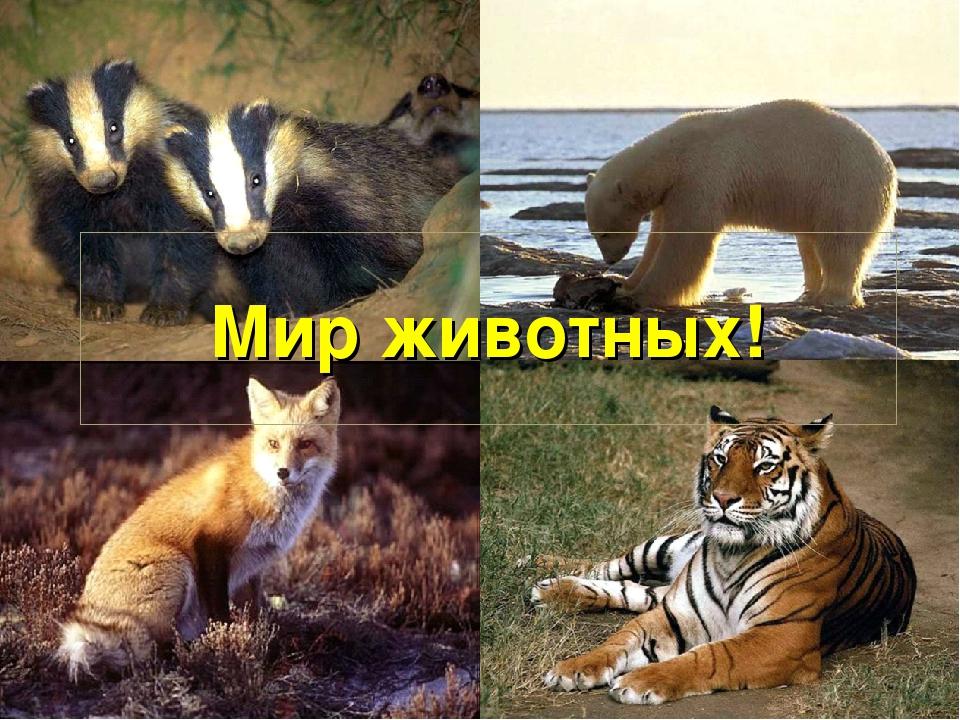 Мир животных!