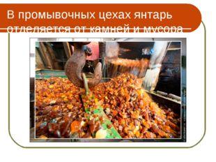 В промывочных цехах янтарь отделяется от камней и мусора
