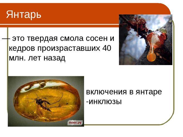 Янтарь — это твердая смола сосен и кедров произраставших 40 млн. лет назад вк...