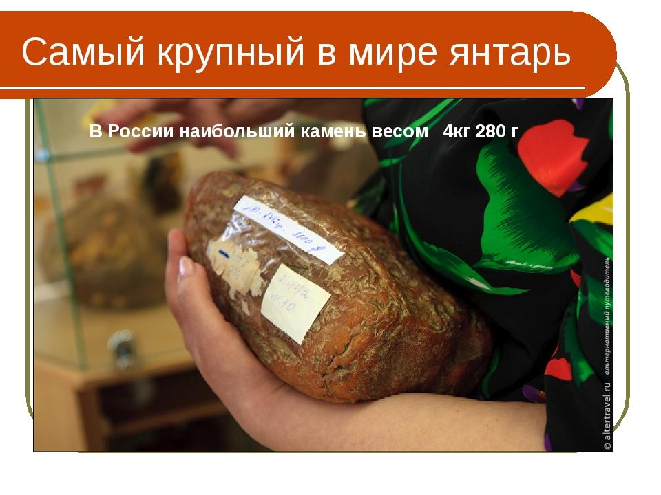 """Самый крупный в мире янтарь """"Бирманский янтарь"""", имеет массу 15 кг 250 г! хра..."""