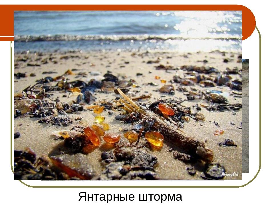 Голубовато-серая земля-содержит кусочки янтаря Янтарные шторма