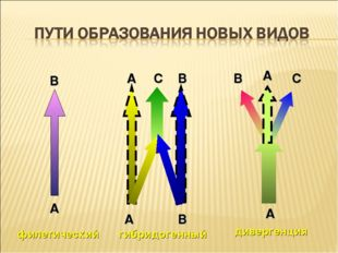 филетический гибридогенный дивергенция А А А В В В С С А А В