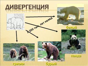 гризли бурый панда белый ≈200 тыс. лет назад