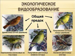 Попугайная цветочница (семена и ягоды) Древесница (почки деревьев) Серпоклювк