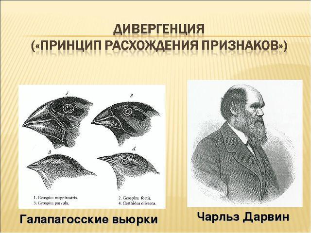 Чарльз Дарвин Галапагосские вьюрки