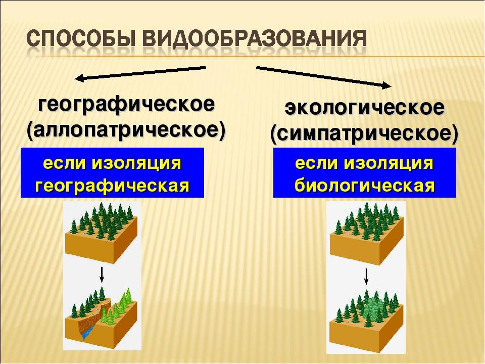 географическое (аллопатрическое) экологическое (симпатрическое) если изоляция...