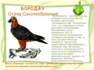 БОРОДАЧ Отряд Соколообразные Численность - неизвестна, но в Казахстане исчисл
