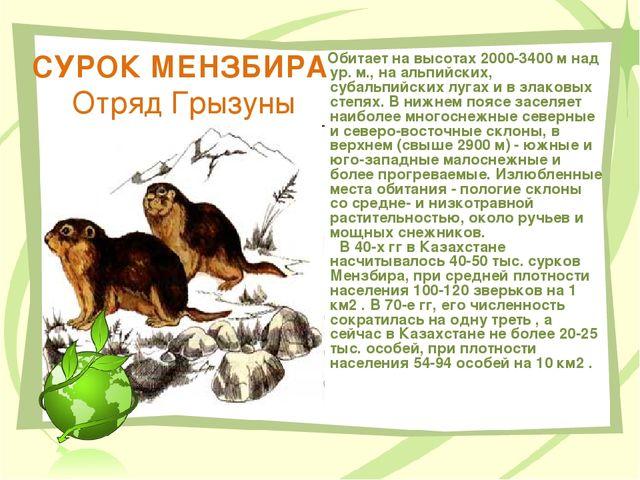 СУРОК МЕНЗБИРА Отряд Грызуны Обитает на высотах 2000-3400 м над ур. м., на ал...