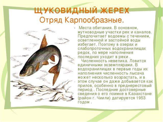 ЩУКОВИДНЫЙ ЖЕРЕХ Отряд Карпообразные. Места обитания. В основном, мутноводные...