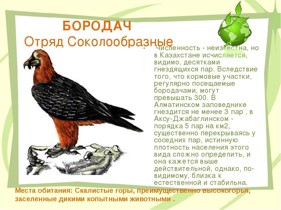 БОРОДАЧ Отряд Соколообразные Численность - неизвестна, но в Казахстане исчисл...