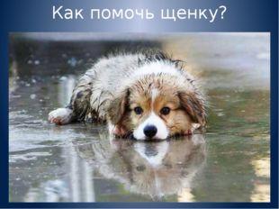 Как помочь щенку?