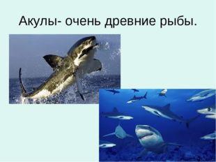 Акулы- очень древние рыбы.