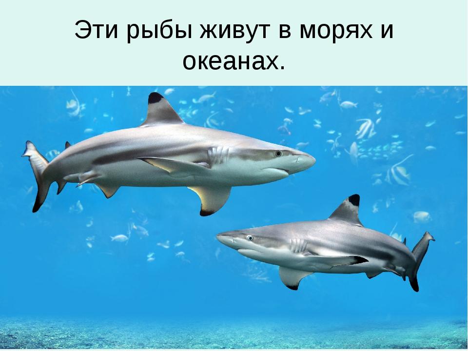 Эти рыбы живут в морях и океанах.