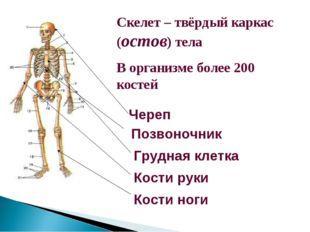Скелет – твёрдый каркас (остов) тела В организме более 200 костей Череп Позво