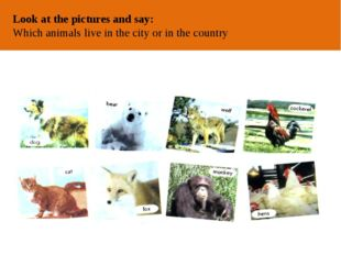 ОТ АВТОРА Look at the pictures and say: Which animals live in the city or in