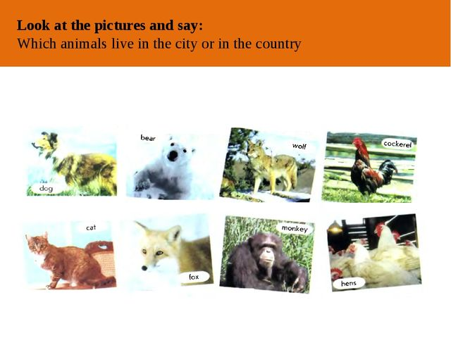 ОТ АВТОРА Look at the pictures and say: Which animals live in the city or in...