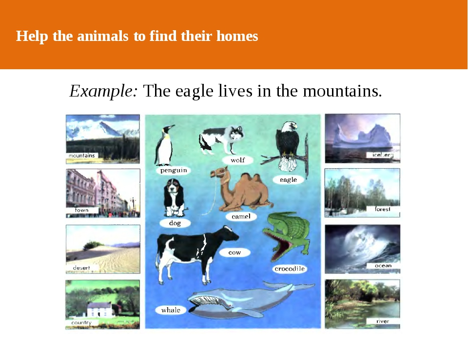 ОТ АВТОРА Help the animals to find their homes Example: The eagle lives in th...