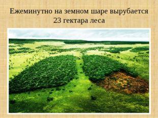 Ежеминутно на земном шаре вырубается 23 гектара леса