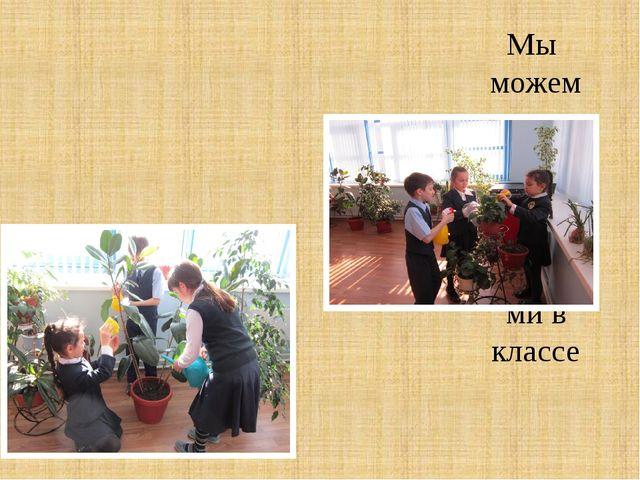 Мы можем ухаживаем за комнатными растениями в классе