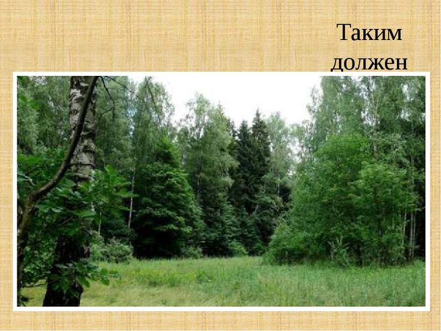 Таким должен быть наш лес!